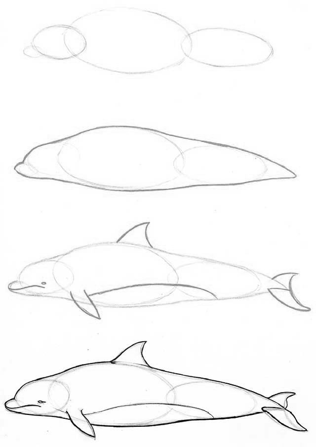 Як намалювати дельфіна? - уроки малювання