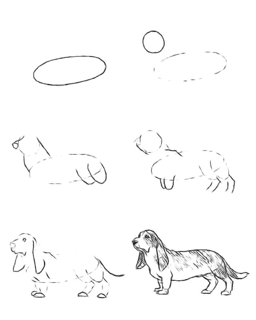 Собака  Википедия