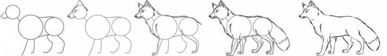Поэтапные рисунки карандашом лис
