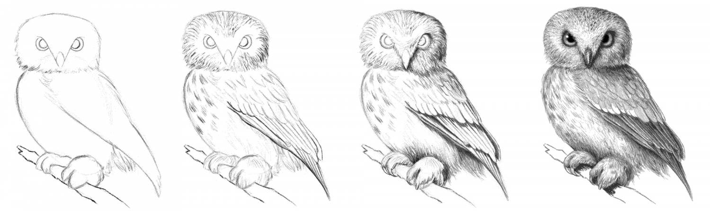 Рисовать карандашом совушку