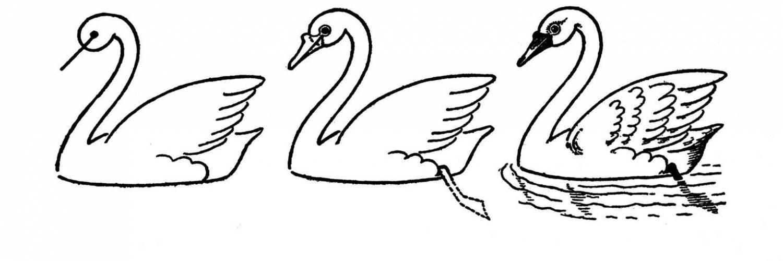 Учимся рисовать прекрасного лебедя поэтапно простым карандашом