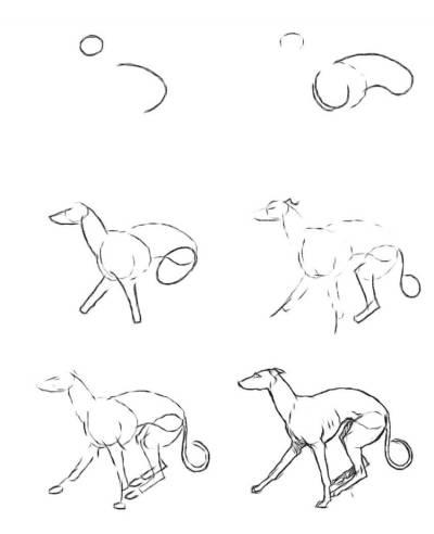 Рисуем собаку лесси