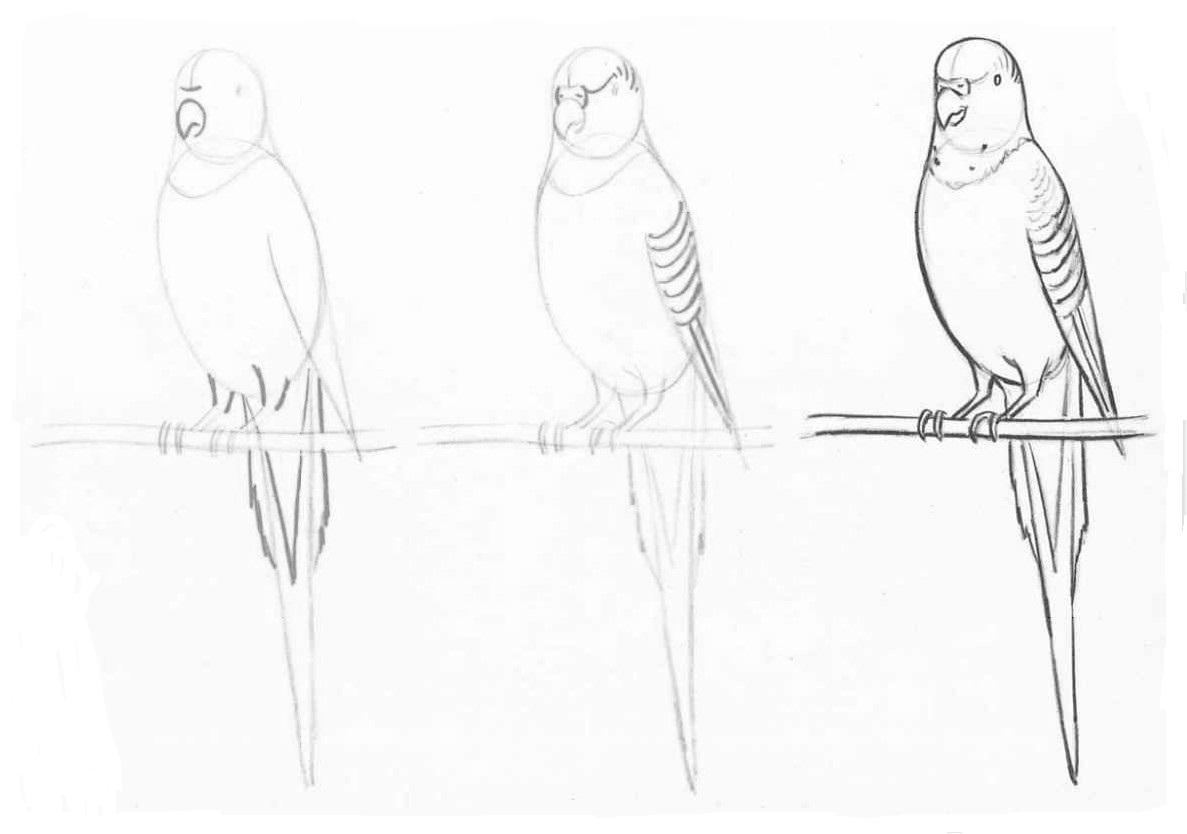 Как рисовать попугая карандашом поэтапно